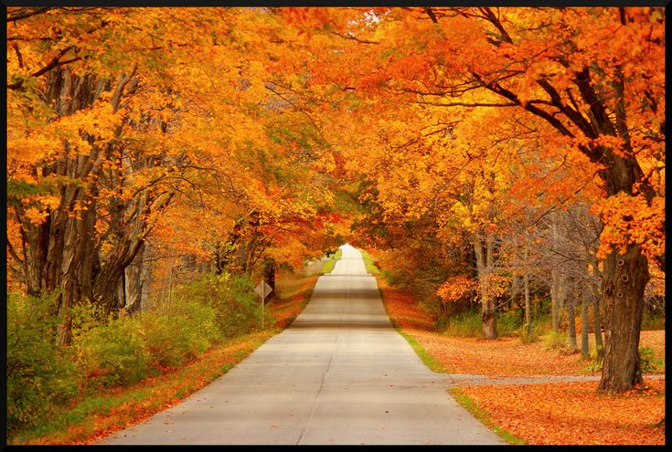 Stare in amazement as the vibrant fall colors in Wisconsin are certainly a sight worth seeing.