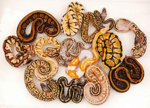 Love this snake skin. beautiful patterns.