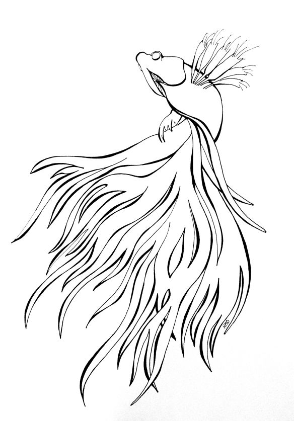 Simple Fish Line Art : Best siamese fighting fish images on pinterest betta