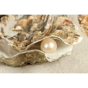 Fresh Water Oyster