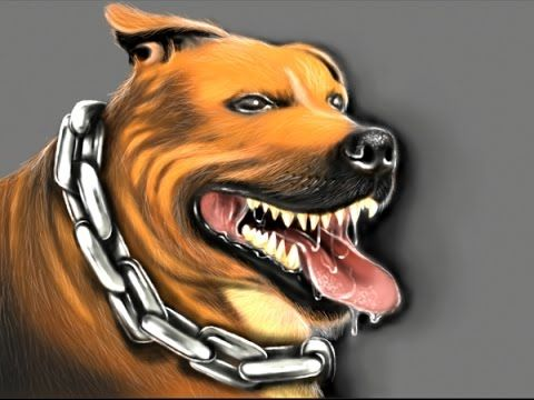 To Draw a Pit Bull dog Speedpaint drawing - YouTube