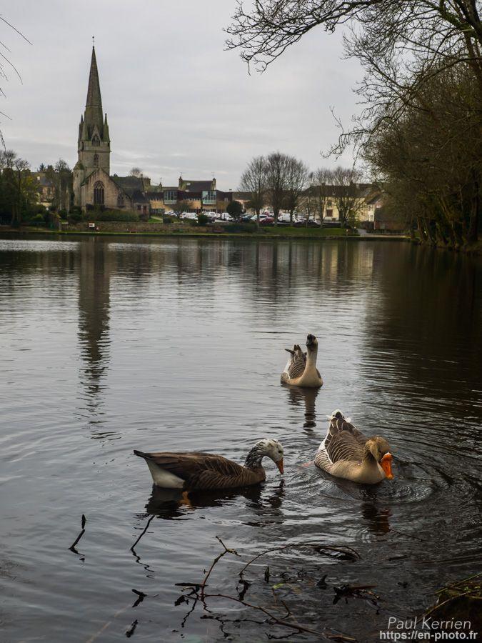 matinée autour des étangs  - à Rosporden © Paul Kerrien 2018 https://en-photo.fr Finistère Bretagne
