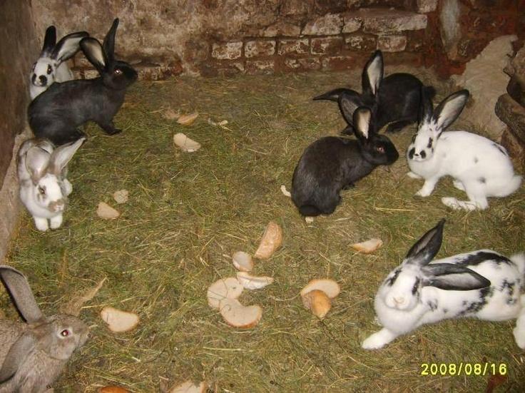 Jankowice, Poland • Animals #rabbit | Funny - PlaceKnow.com | Pinte ...