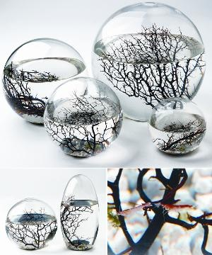 EcoSphere - Selfcontained Aquatic Ecosystem - Pure Modern Design Lifestyle Objects: Gifts Ideas, Geek Gifts, Glasses Ball, Shrimp, Aquarium, Spaces Travel, Aquatic Ecosystems, Cheap Gifts, Modern Design