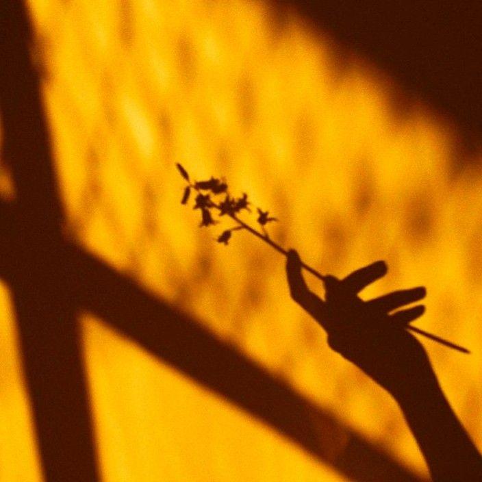 Epingle Par Ella Boyd Sur Lemon En 2020 Esthetique Jaune Photographie Jaune Fond Jaune