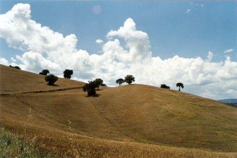 I campi di grano sotto il convento di Santa Maria in Orsoleo