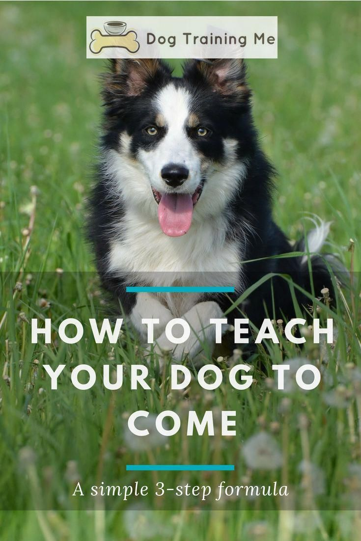 Tips Guide And Ideas For Best Dog Training Tricks Some Dogs Are