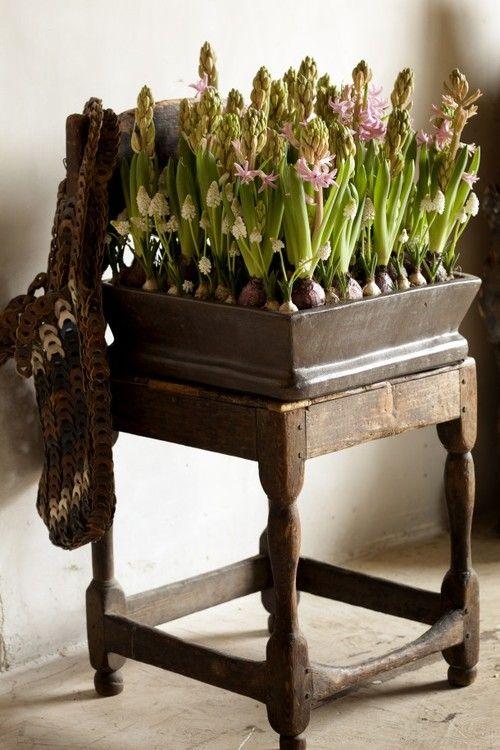 focus-damnit: (via Bloembollen voor binnen en buiten | Hyacinten in warme kleuren voor in huis. Door Tamara)