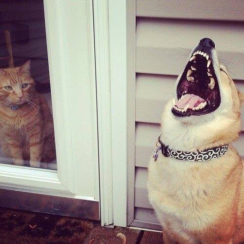 """""""Do u need me to whack your mouth off, dog?"""" /:333"""