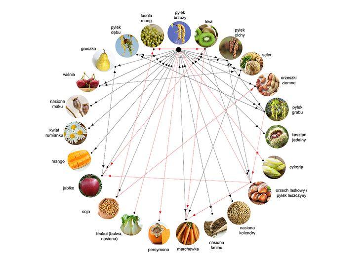 Potencjalne reakcje krzyżowe pomiędzy głównym alergenem brzozy (Bet v1) i jego homologami.