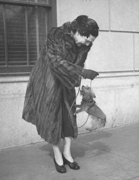 Artist Fannie Hurst dressed in a mink coat,enjoying the enjoying the jumping antics of her Yorkshire terrier Orphan Annie-NYC - Photo by Nina Leen - 1944