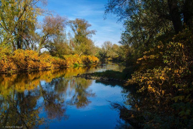 Jesień nad Odrą