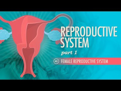 Reproductive System, part 1 - Female Reproductive System - Watch and Study
