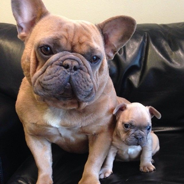 Dad and I just chilling by thor_thefrenchie