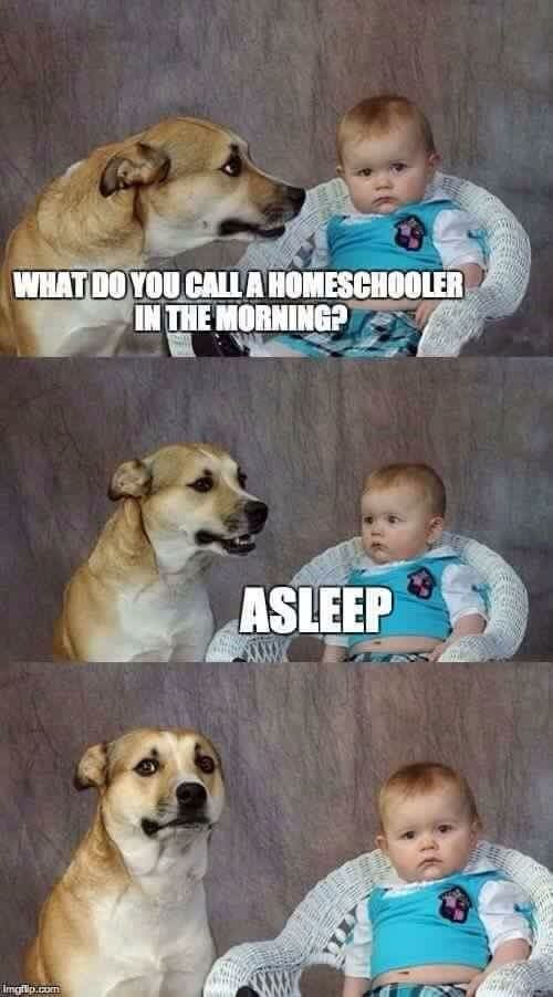 What do you call a homeschooler in the morning? Asleep. | Funny memes | LOL, yes.