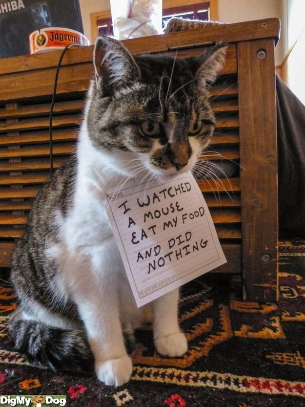 I'm not a fan of internet animal shaming, but this one is just too funny.