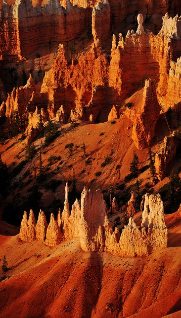 Sunrise Point, Bryce Canyon National Park, Utah; photo by Ryan Houston