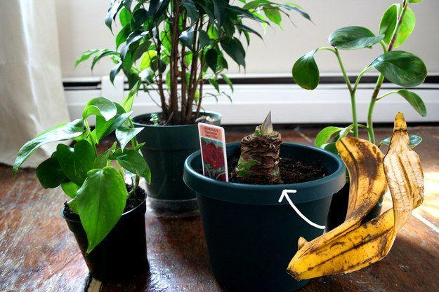 Uklidit pomocí potravin: Zářivé listy zaručí slupka od banánu