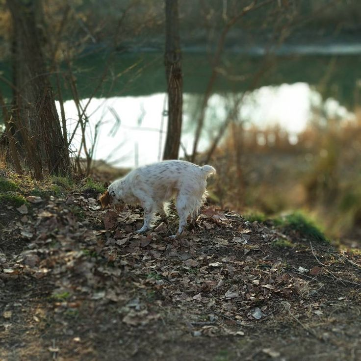 Como el campo no hay nada.  #mahe  #vet #vetathome #veterinaria  #veterinary #veterinarians #veterinarian #veterinariaadomicilio #anothergirlinthehouse #perros #spanielbreton #spaniel #bretones #bretona #breton #dogstagram #madridanimal #animallove #animalLover #animalesamigos #iloveanimals