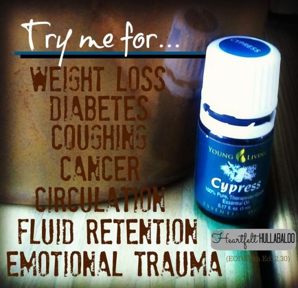 Young Living's Cypress. Try me for weight loss, diabetes, coughing, cancer, circulation, fluid retention, emotional trauma. Heartfelt Hullabaloo by jayne