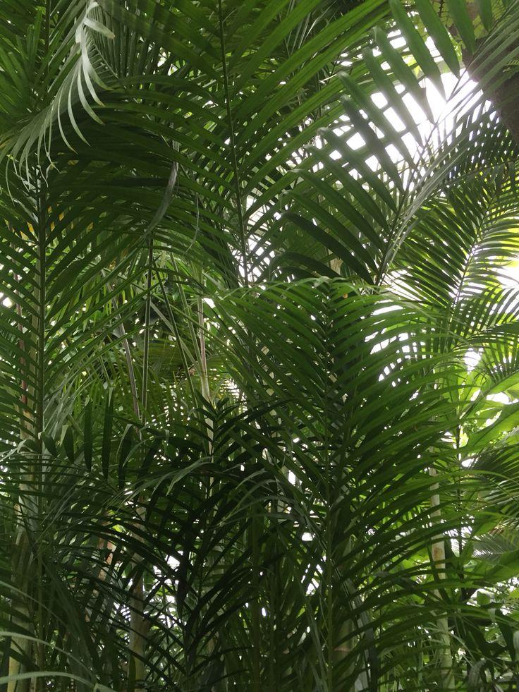 Epic Palme Palmengarten Frankfurt Germany