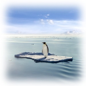 Has #Google Penguin Left You Out In The Cold? #SEO