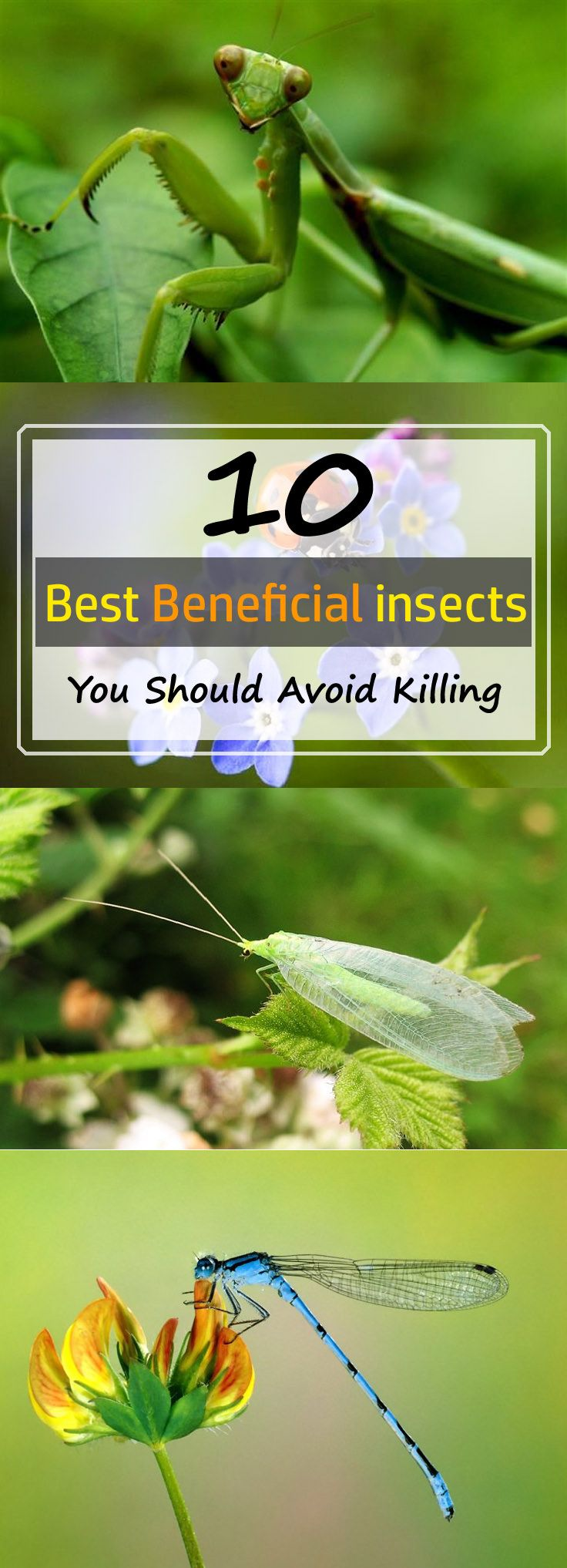 Find out 10 most useful and beneficial garden insects you should avoid killing. Some of them pollinate flowers for you and some like to kill insects and harmful garden and yard pests.