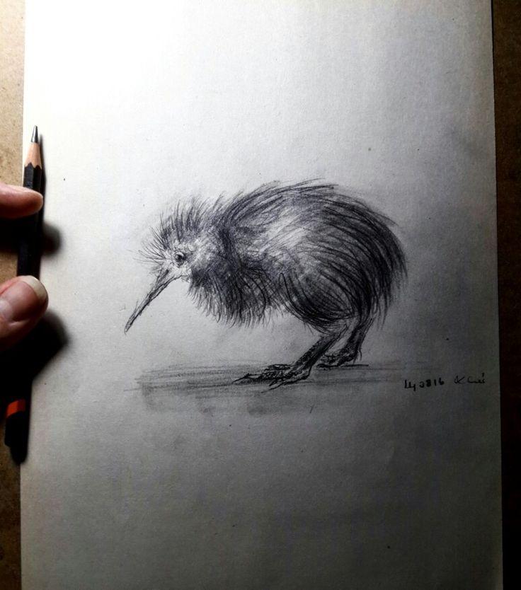 Kiwi bird sketch art