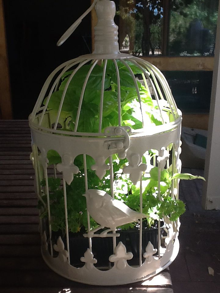 Parsley and sweet basil bird cage