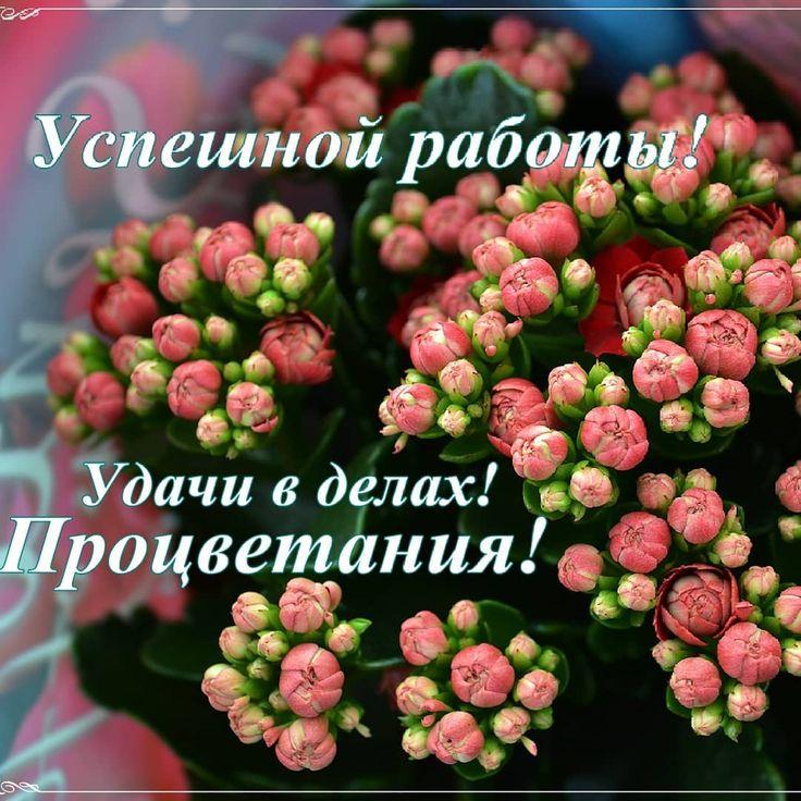 пожелания успеха удачи веселые стихи и картинки поливинилхлоридные вспененные