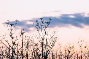 EMILY OBRIEN | https://emilyobrienlifestyle.com    Pastel Wild Botanical Sunset Photographic Print