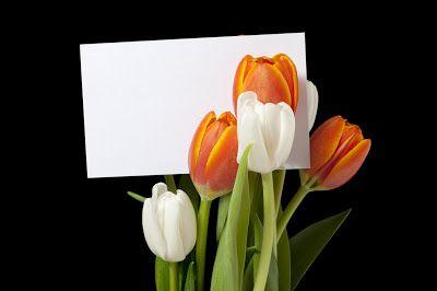 22 postales de flores para escribir tus propios mensajes... | Banco de Imágenes, Fotos y Postales...