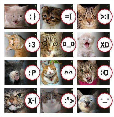 Cattt