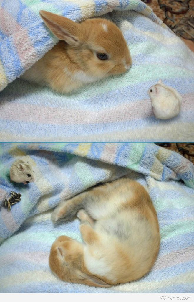 bunnies love other pets もっと見る