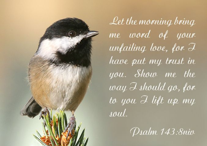Psalm 143:8 Let the morning bring me word of your unfailing love, for I have pt my trust in you. Show me the way I should go, for to you I life up my soul.