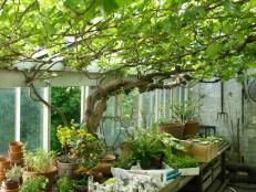 Well-Loved (and Used) Greenhouses   Landscaping Ideas and Hardscape Design   HGTV