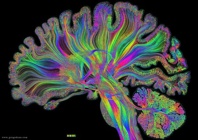 Giant Artwork Reflects The Gorgeous Complexity of The Human Brain