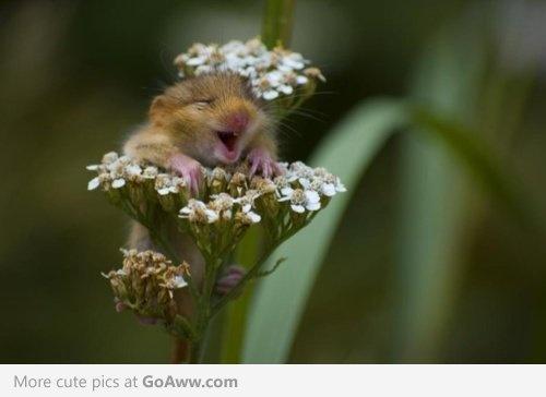 ・: Happy Faces, Mice, So Cute, Pure Joy, So Happy, Hamsters, Baby Animal, Flower, Make Me Smile