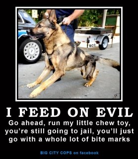 I feed on evil: German Shepards, Animal Pictures, Chewing Toys, Cops, Funny Stuff, German Shepherd Police Dogs, Law Enforcement, Police Offices Husband, Funny Animal