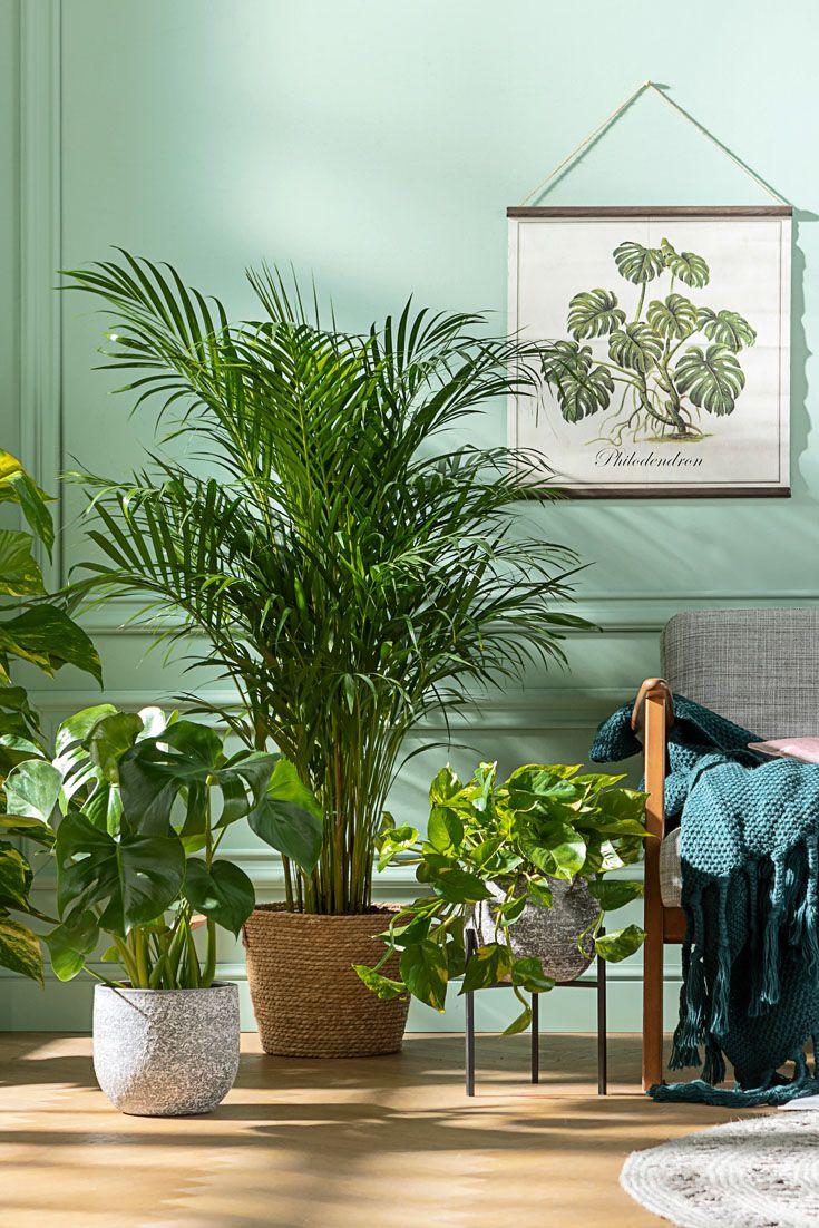 Zimmerpflanzen Passend Zu Deinem Farbkonzept Pflanzen Zimmer Zimmerpflanzen Zimmerpflanzen Ideen