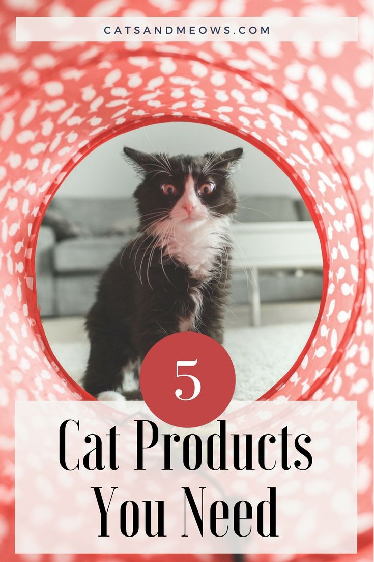 Every Pet owner needs some exciting fun products for their cats.