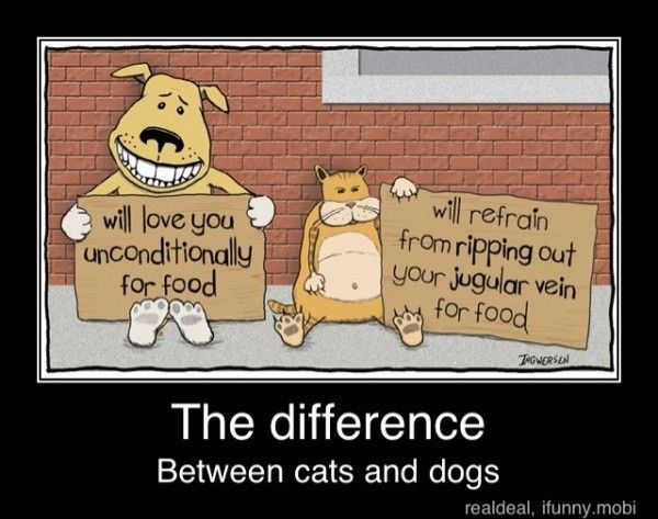 Difference Between Pet and Domestic Animals