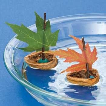 Bateau à voile (écaille de noix, pâte   à modeller, feuille d'arbre)
