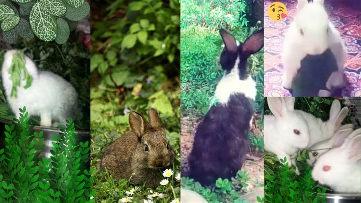 Cute baby Rabbits eating leaves|Cutest Baby Bunnies|Alky Silky|     #BabyRabbitC…
