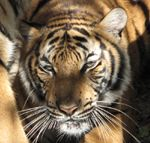 BREC's Baton Rouge Zoo - The #1 Family Year-Round Attraction in Baton Rouge!