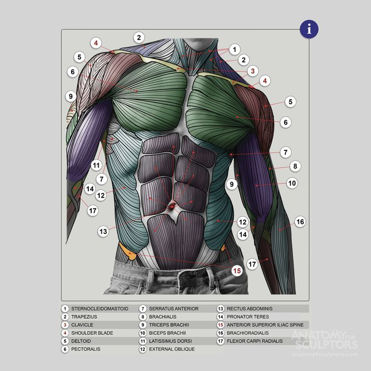 97 mejores ideas en anatomy en Pinterest   Anatomía humana, Consejos ...
