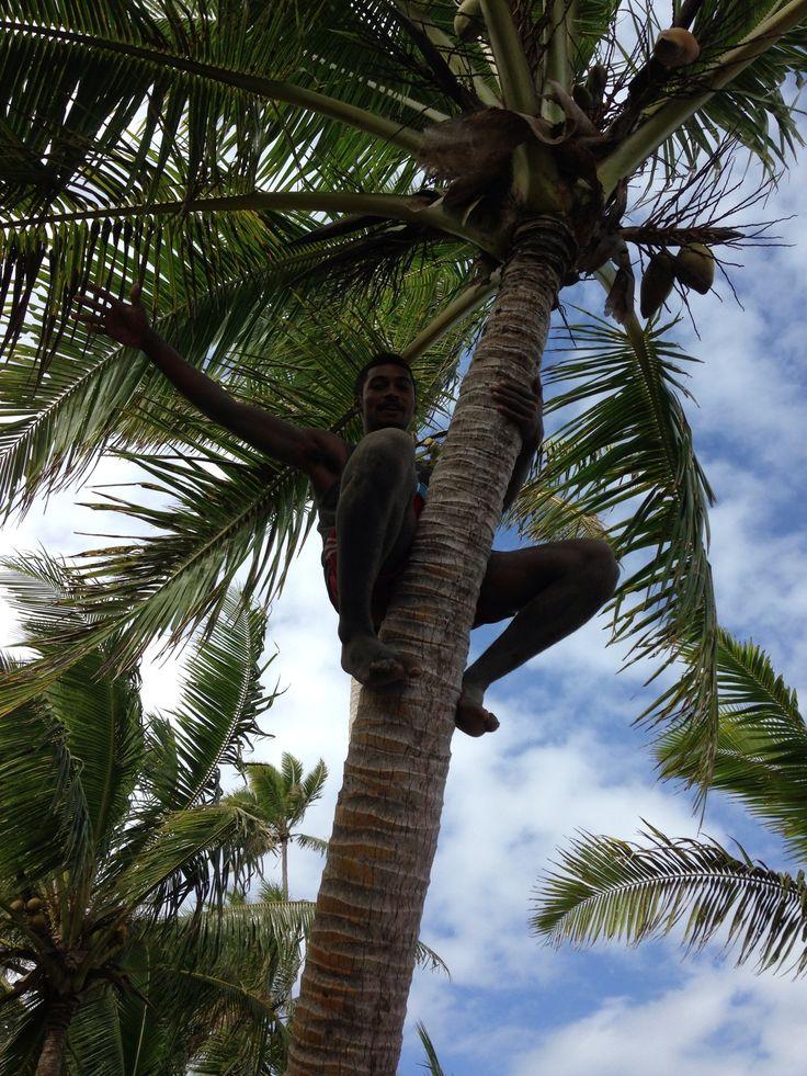 Coconut Tree climbing.