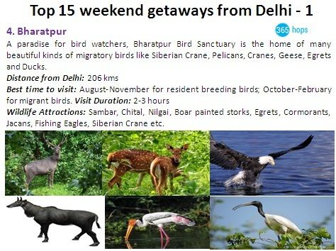 Bharatpur : A paradise for bird watchers, #Bharatpur #BirdSanctuary is the home of many beautiful kinds of migratory birds like Siberian Crane, Pelicans, Cranes, Geese, Egrets and Ducks.