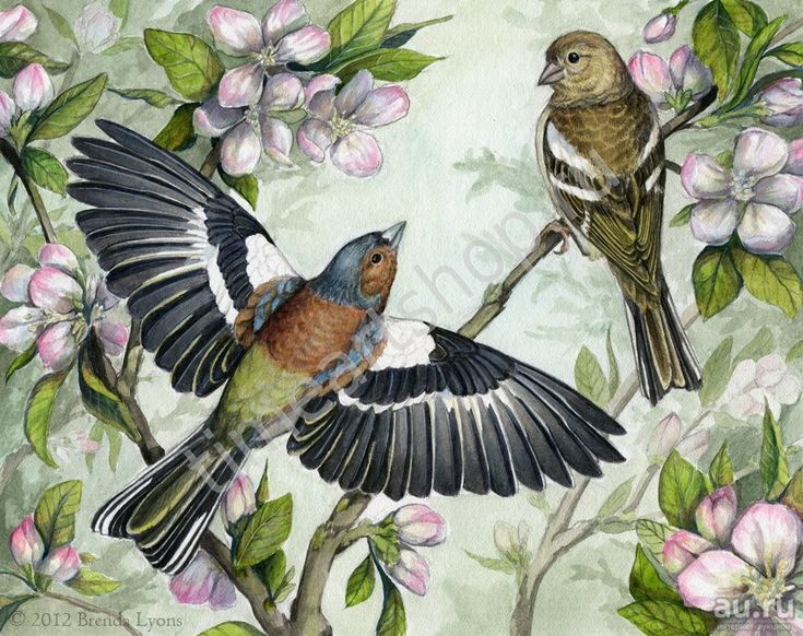 Птички весной, картина раскраска по номерам, размер 40*50 ...