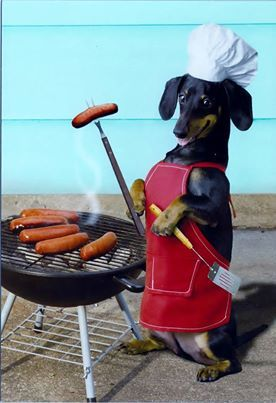 This makes me miss my black 'n tan medium long hair wiener dog Hershey. She couldn't stand up like this cuz she never had to work a day in her life. She was the Queen & we were her chefs...:)